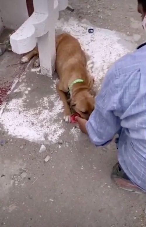 Cane sulla tomba del proprietario