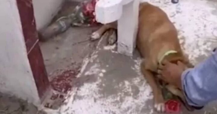 Cucciolo scappato da un rifugio per andare a piangere sulla tomba del proprietario