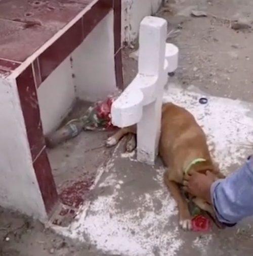 Cane con il cuore spezzato