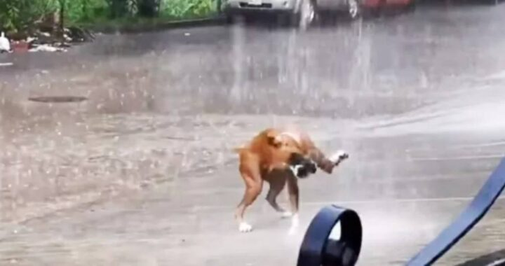 Cucciolo balla sotto la pioggia e ricorda a tutti quali sono le cose importanti della vita