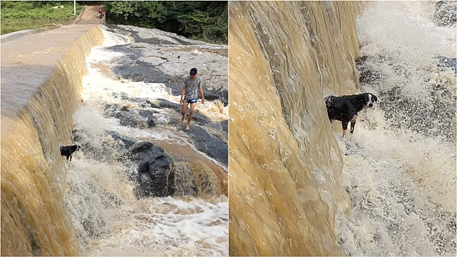 Cane in pericolo nell'acqua