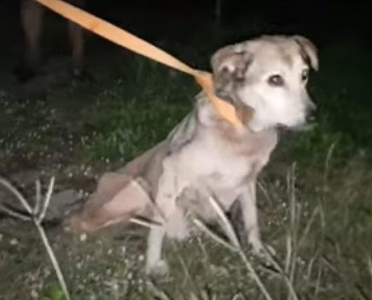 Cane abbandonato in strada