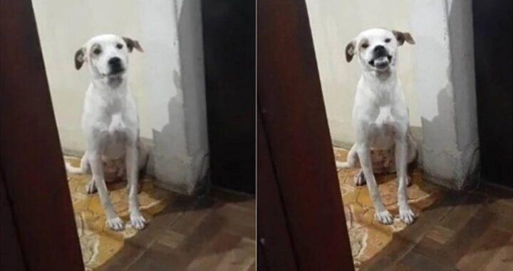 cagnolina sorridente