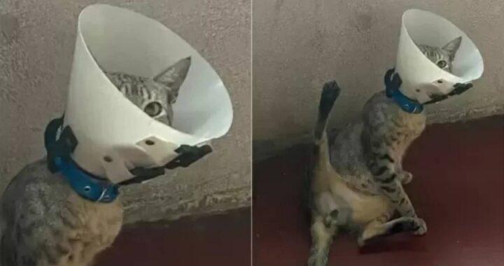 Porta il gatto dal veterinario per sterilizzarlo ma quando tornano a casa scopre che il micio faceva una cosa insolita