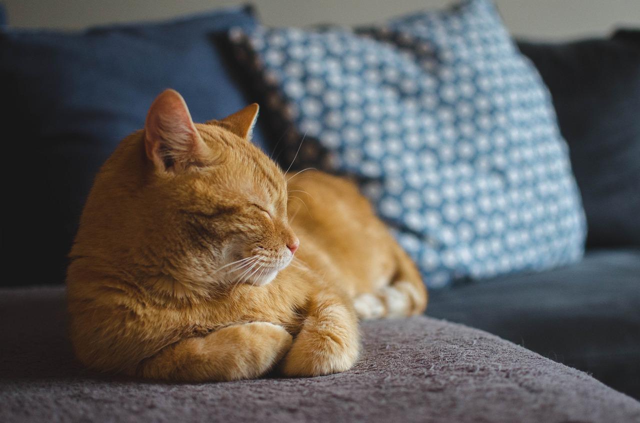 Cat destined to die