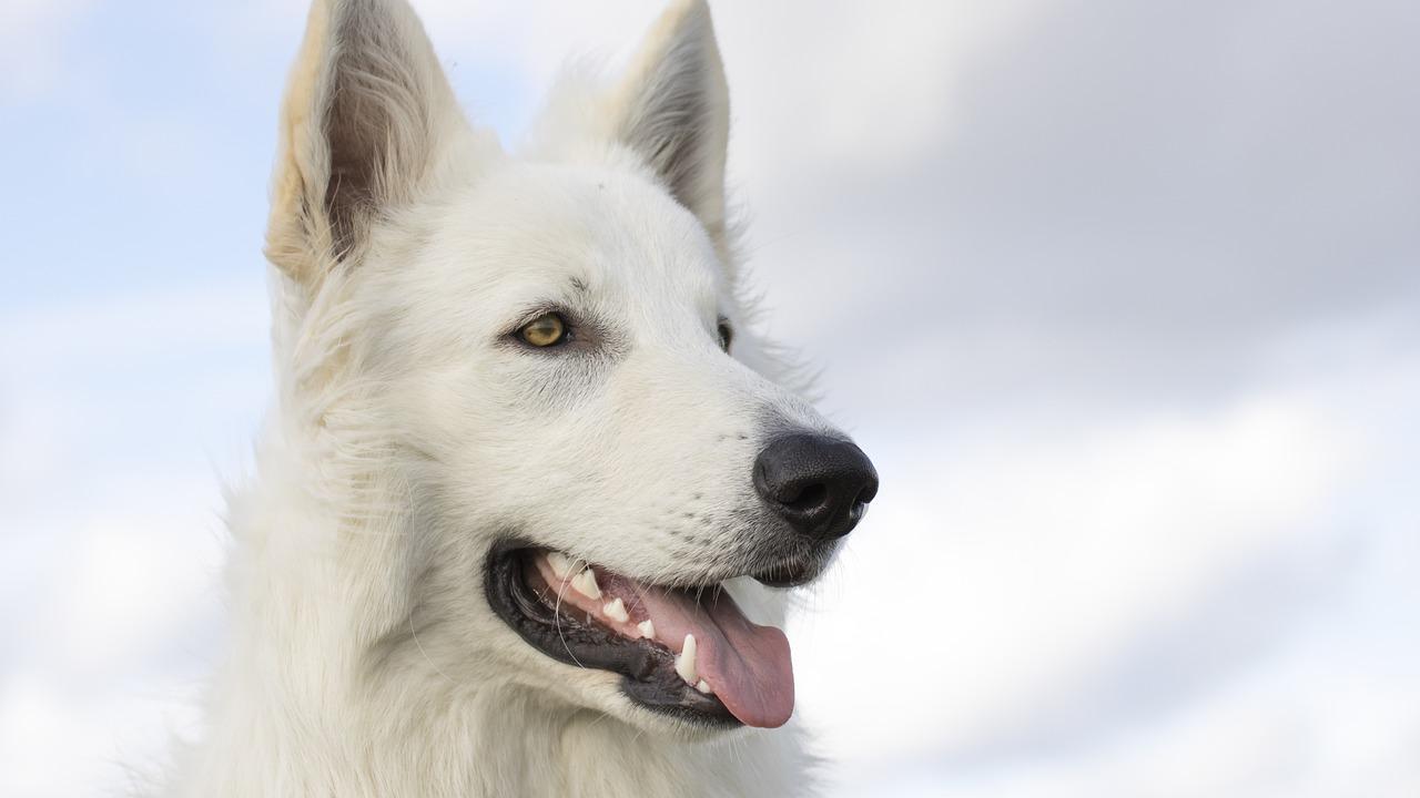 cucciolo sorride