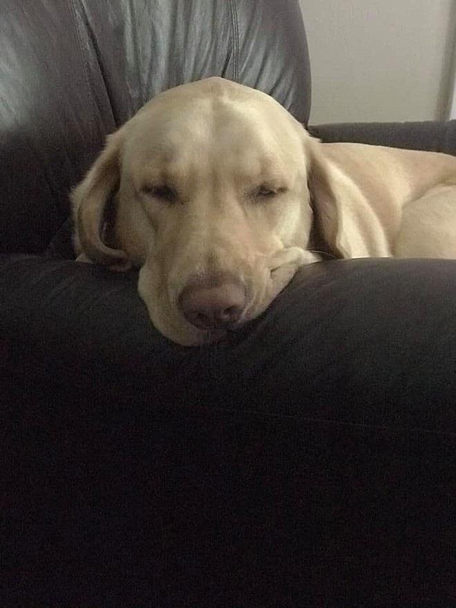 Bonnie dorme