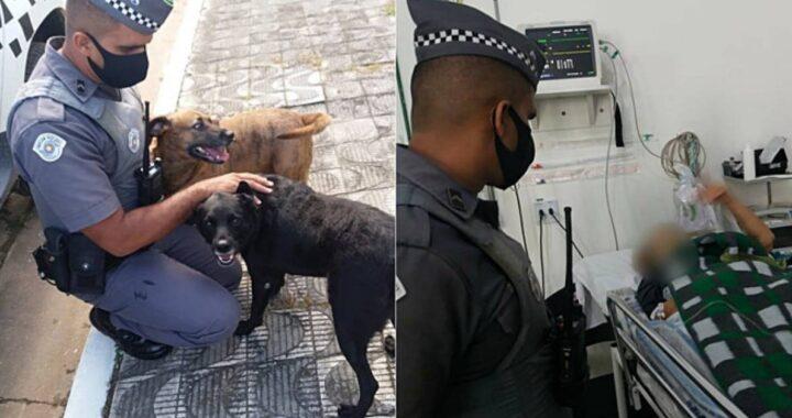 cani salvano donna anziana