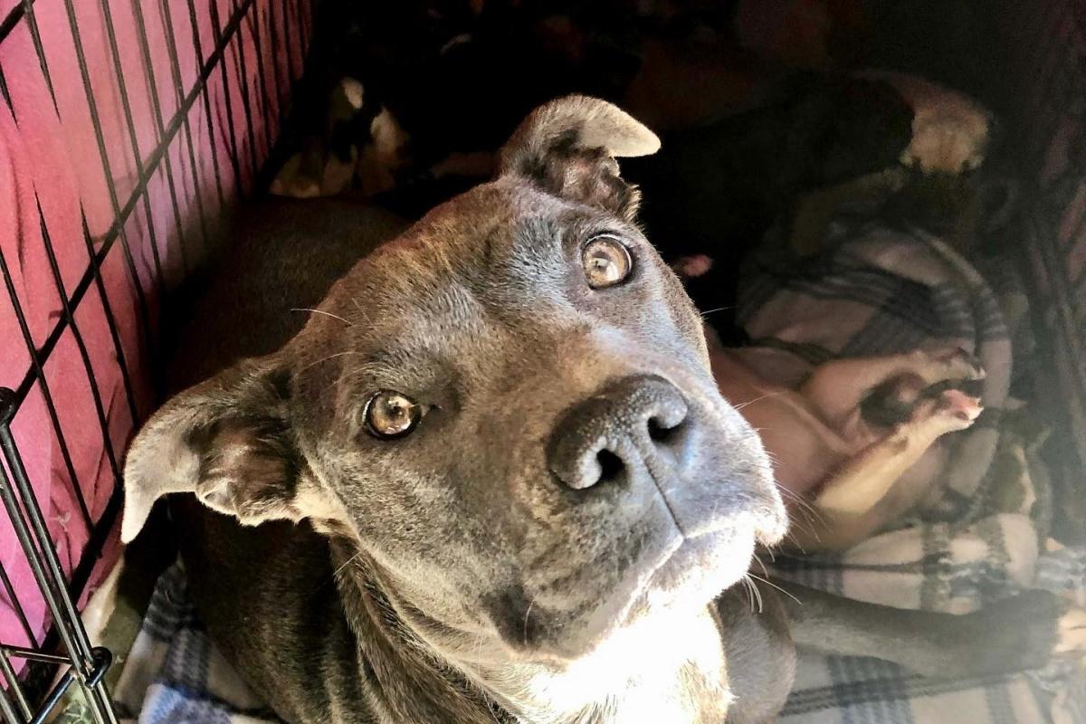 mamma cane salvata