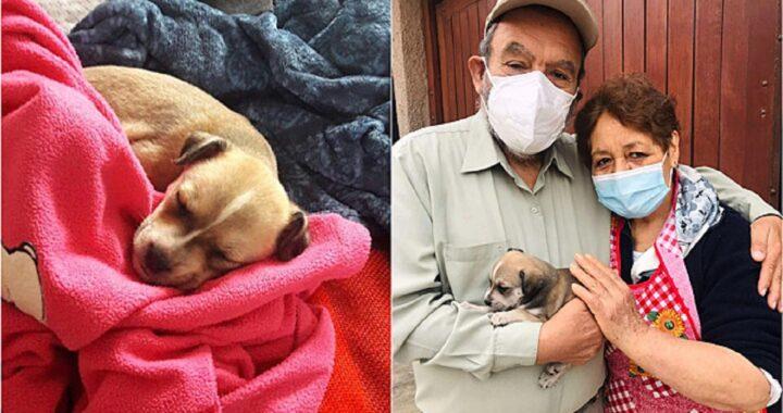 Marito sorprende la moglie con un cucciolo