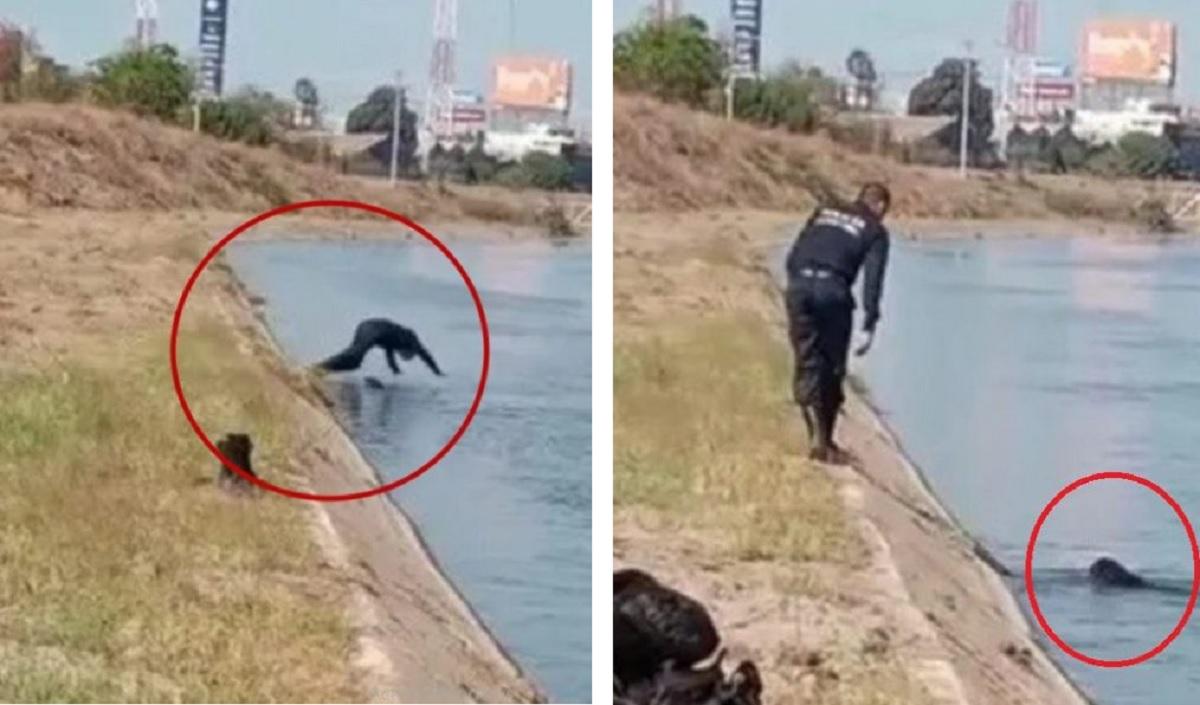 Poliziotto salva un cucciolo