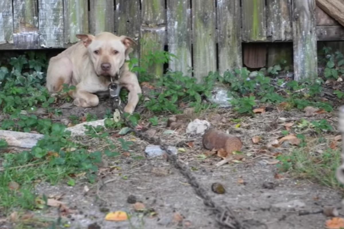 4 cani salvati
