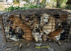 61 cani salvati
