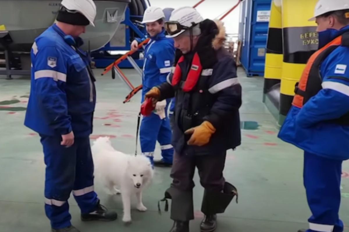 Marinai salvano la vita alla povera Aika