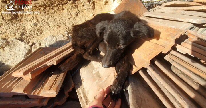 Il salvataggio della cagnolina Arnia