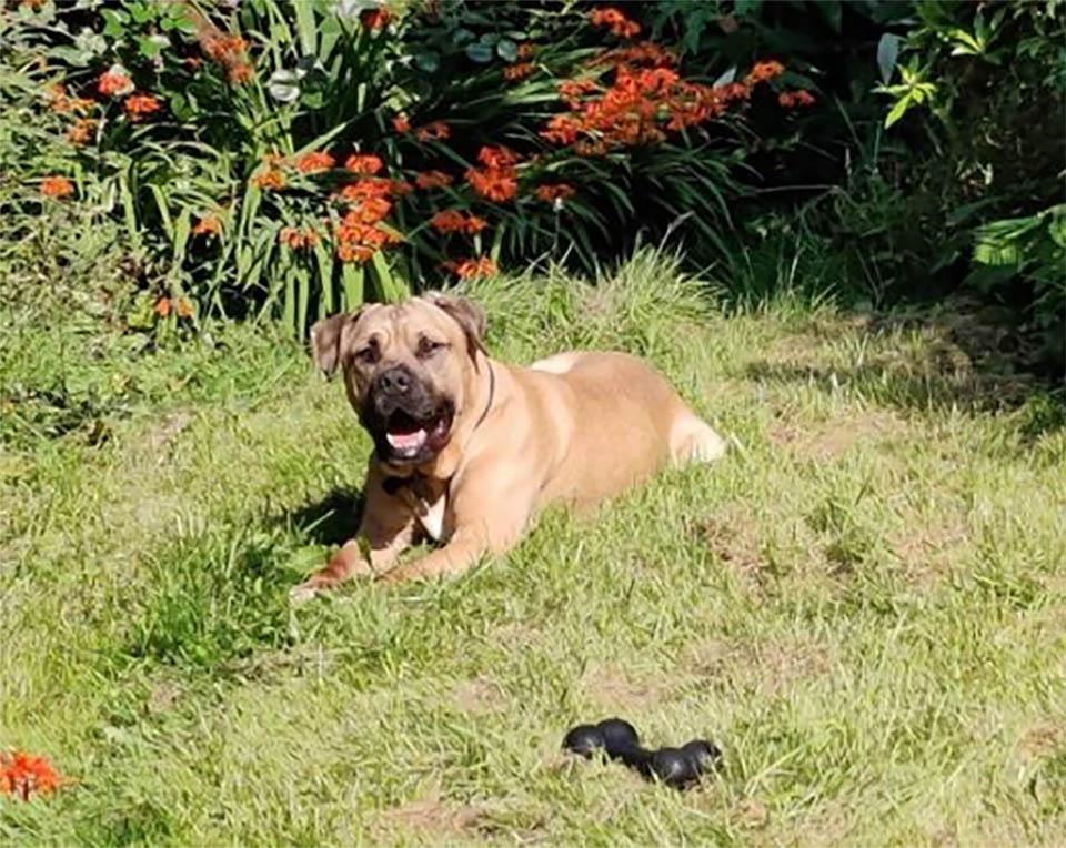 La storia del cane Benny
