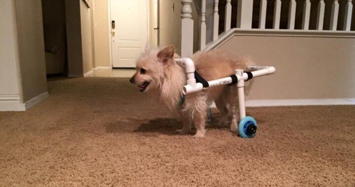 James costruisce una sedia a rotelle per il povero Benny