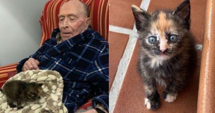 La storia della gattina Bloom e di nonno Manuel