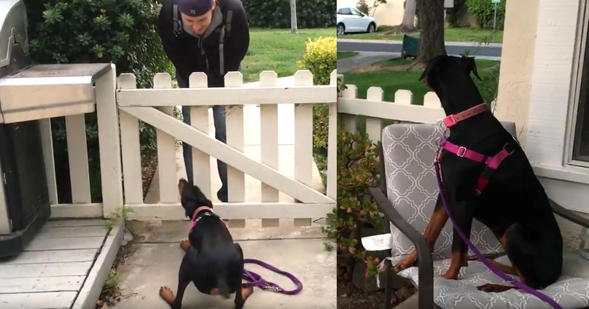 Il video della cagnolina appena adottata