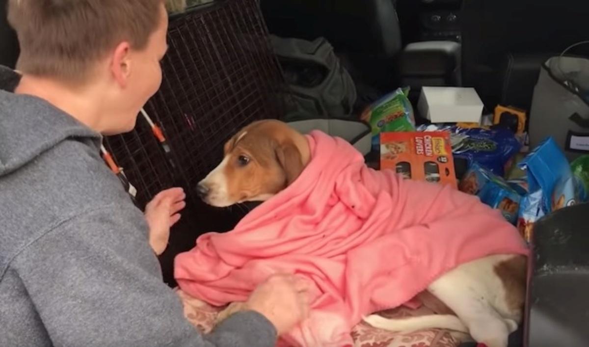 Il salvataggio di un cane abbandonato