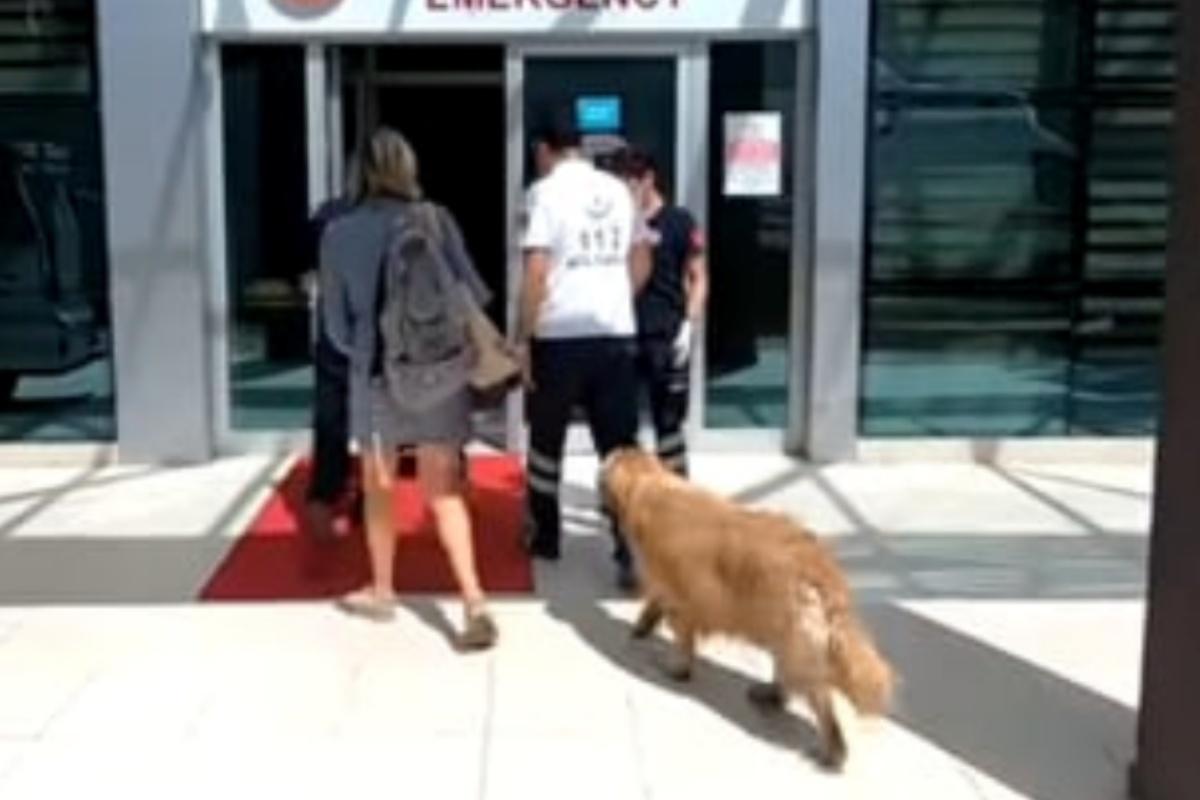 Questo cane ha rincorso l'ambulanza su cui viaggiava suo padre