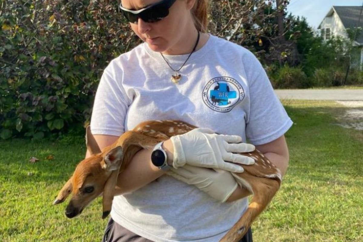 La storia del salvataggio del cucciolo di cervo orfano