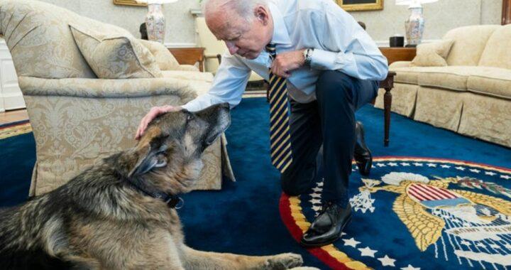 È morto Champ dopo 13 anni d'amore: addio al cane del Presidente Joe Biden