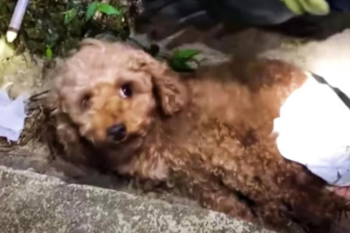 Volontari salvano la cagnolina Cookie