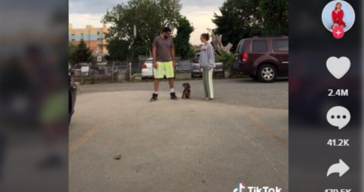 L'ardua scelta del cagnolino