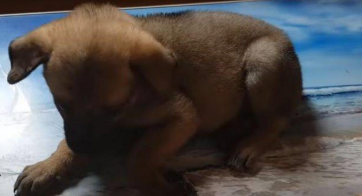 Il salvataggio di un cucciolo coperto di colla
