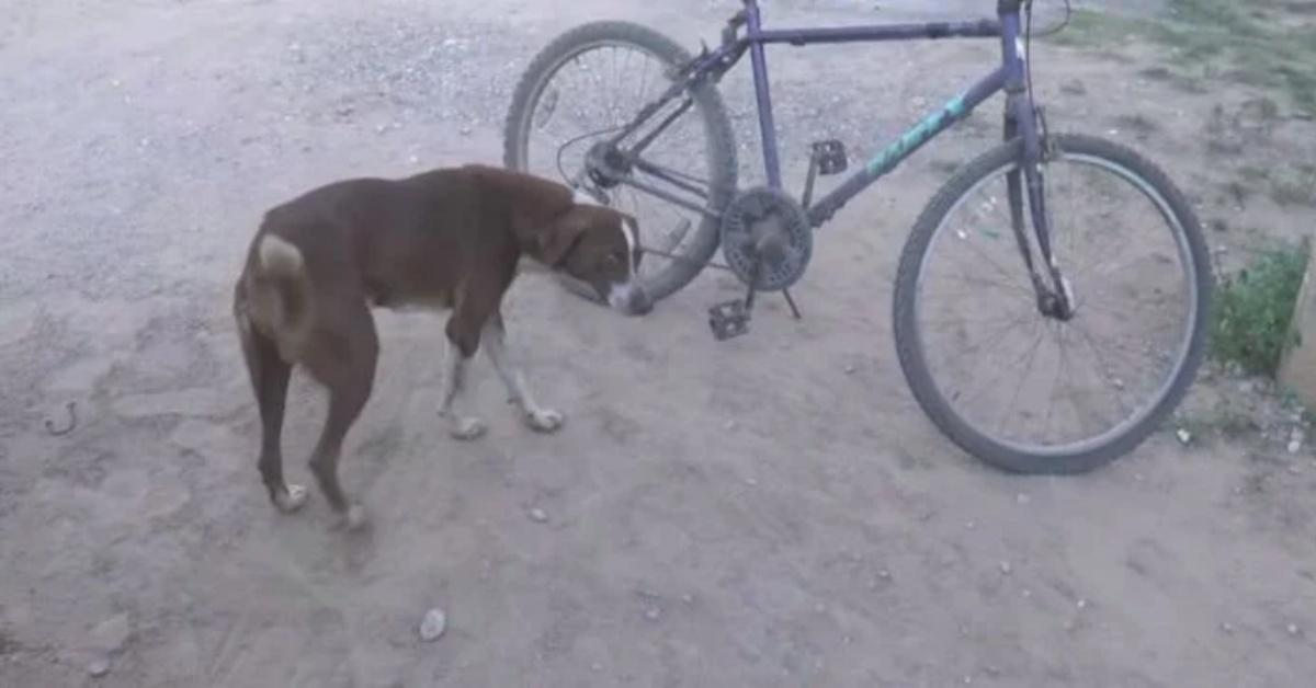La commovente storia del cane Cuchufleto
