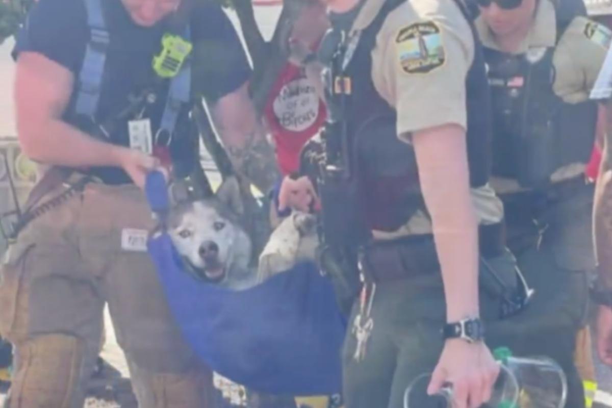Il cane Igor salvato da un incendio