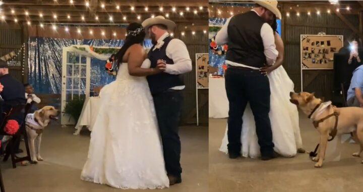 Cane si unisce al primo ballo tra i due sposi: il bellissimo video