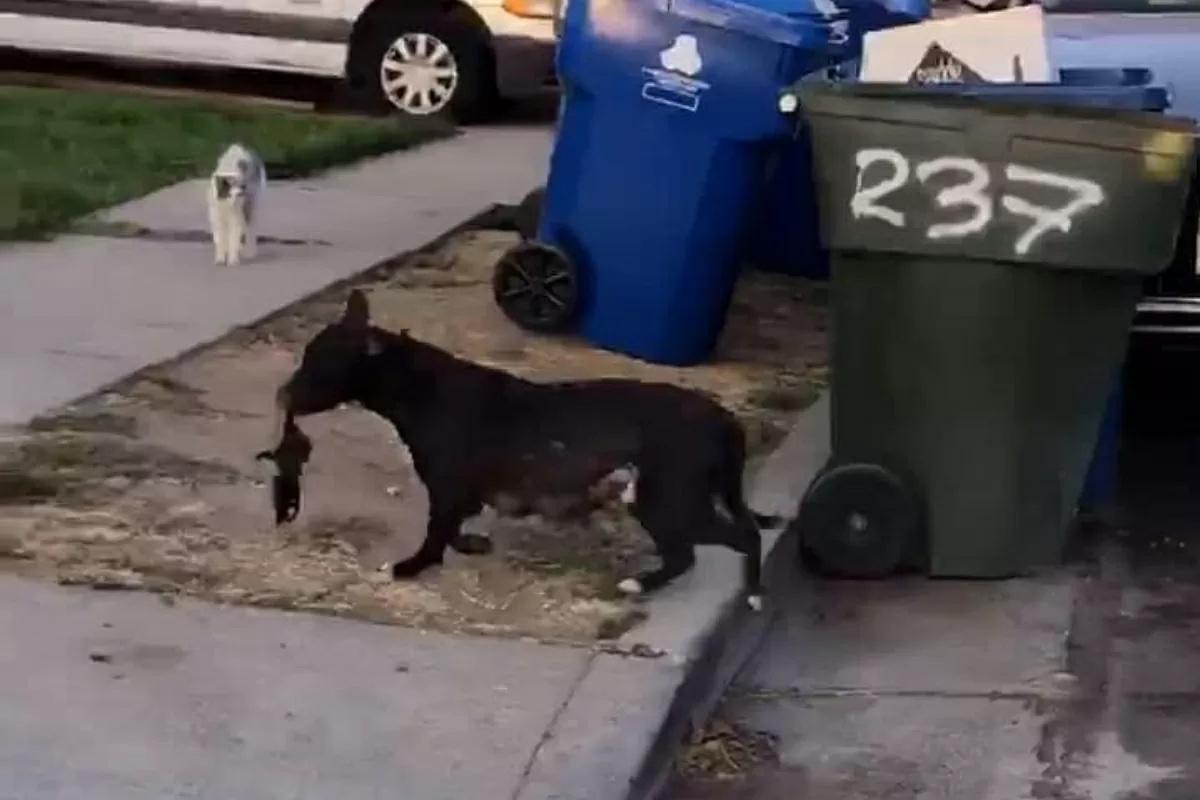 Hope for Paws salva la cagnolina Jade e i suoi cuccioli appena nati