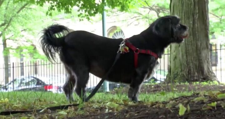 L'eroico salvataggio della cagnolina Joy