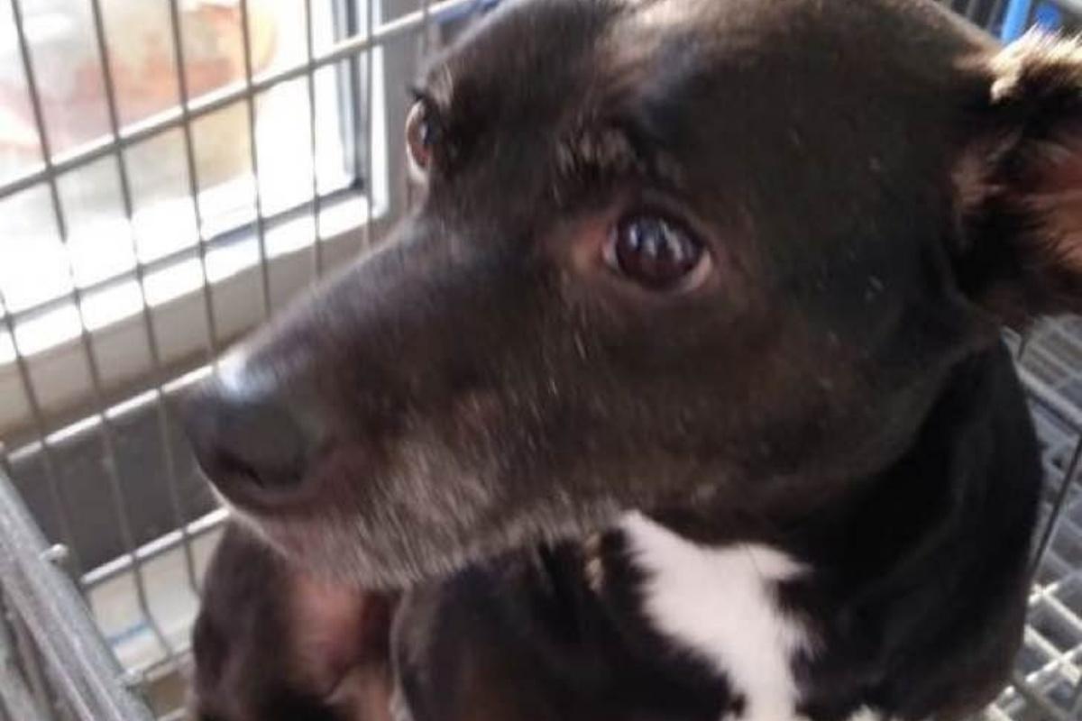 Kimberly riabbraccia il suo cagnolino dopo 6 lunghi anni