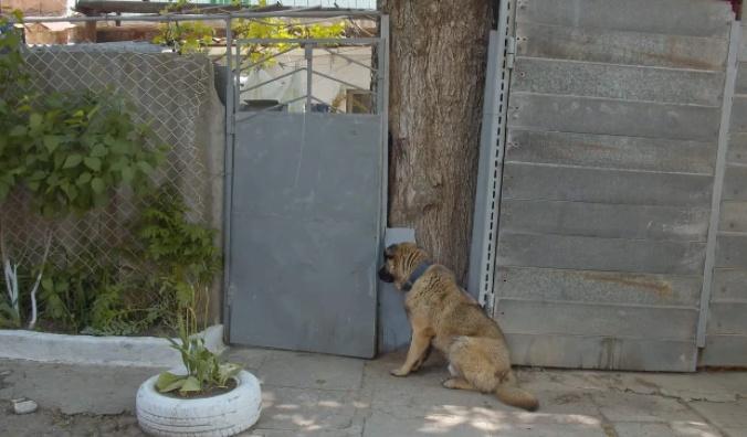L'abbandono del cane Leo
