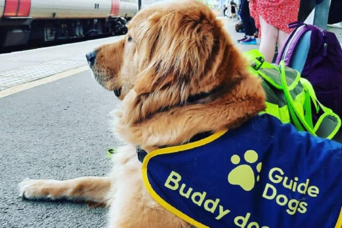 La buddy dog Molly migliora la vita della piccola Grace