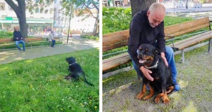 Nato capisce che deve andare a consolare un anziano signore che ha perso il suo cucciolo