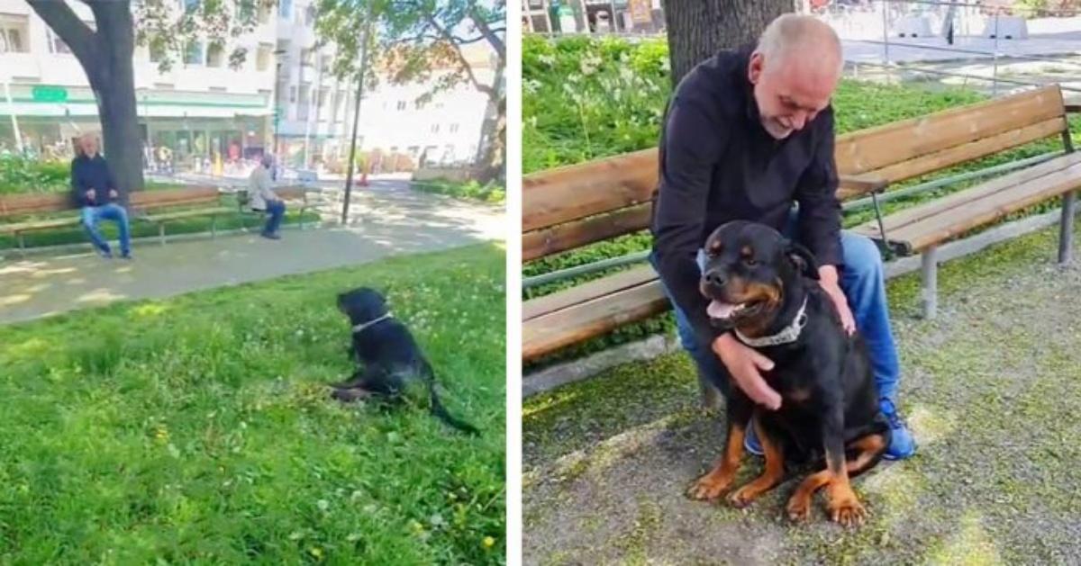 Il meraviglioso gesto del cane Nato