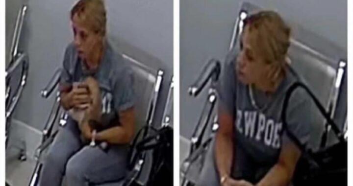 Ritrovato Panda, il cagnolino del cantante Lenier Mesa rubato in una clinica veterinaria