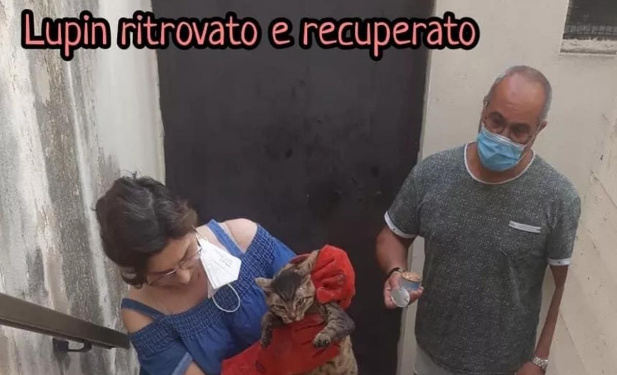 Salvato il gatto Peppino
