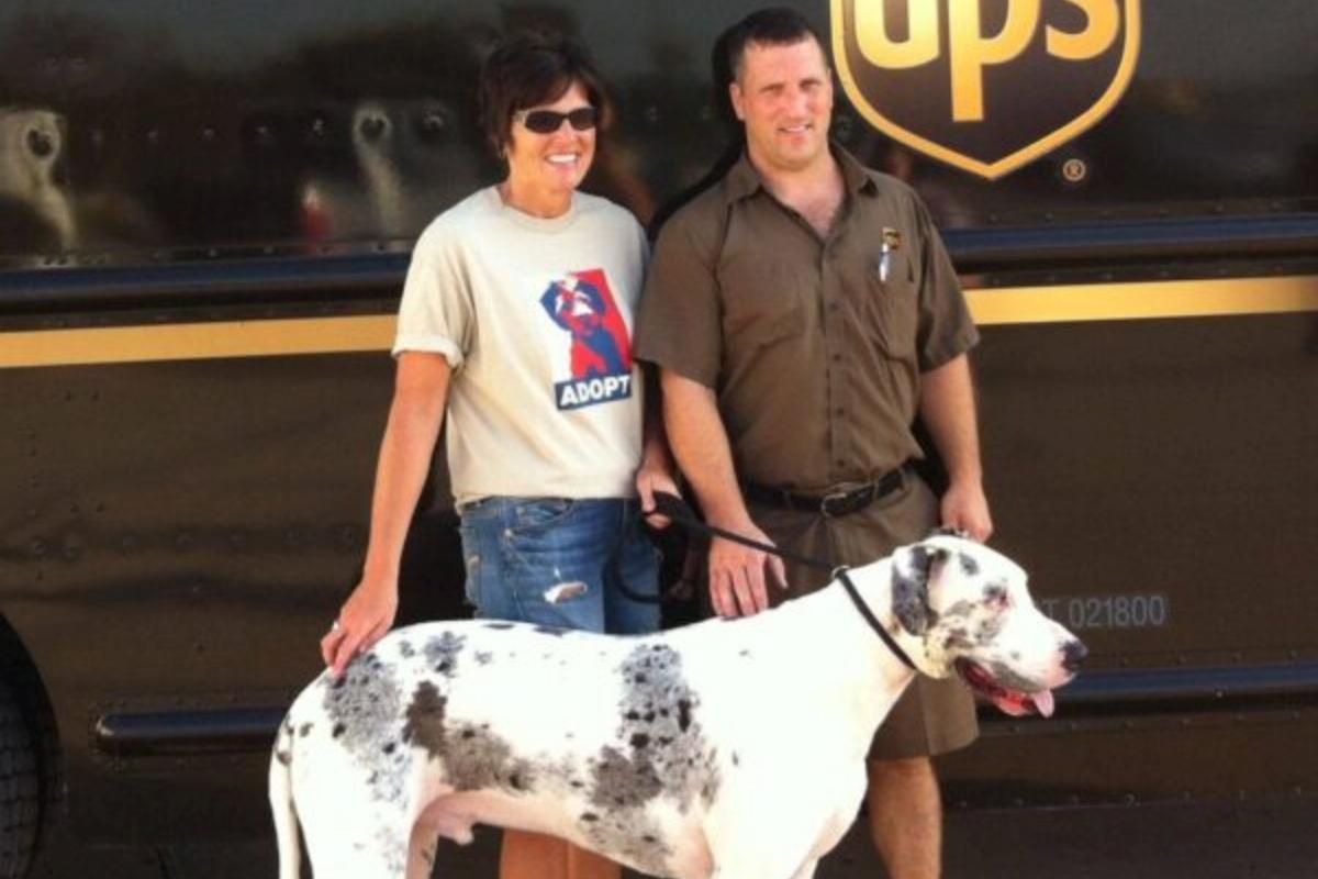 Corriere salva la vita al cane Phoenix