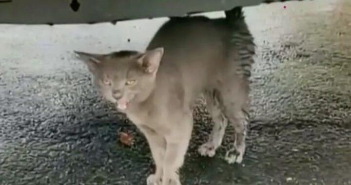 La storia del meraviglioso incontro tra il gatto Popeye e un uomo di nome Jason