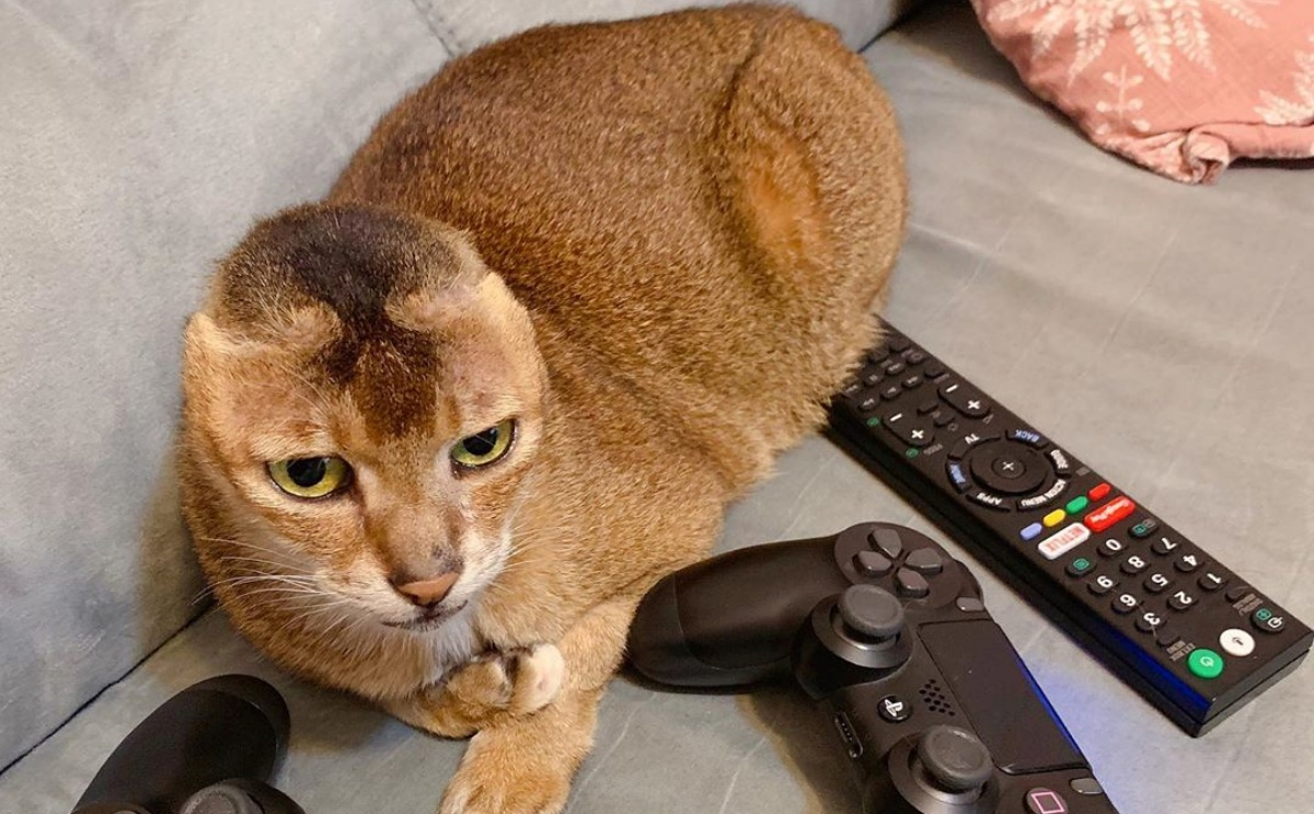 Il gatto Potato
