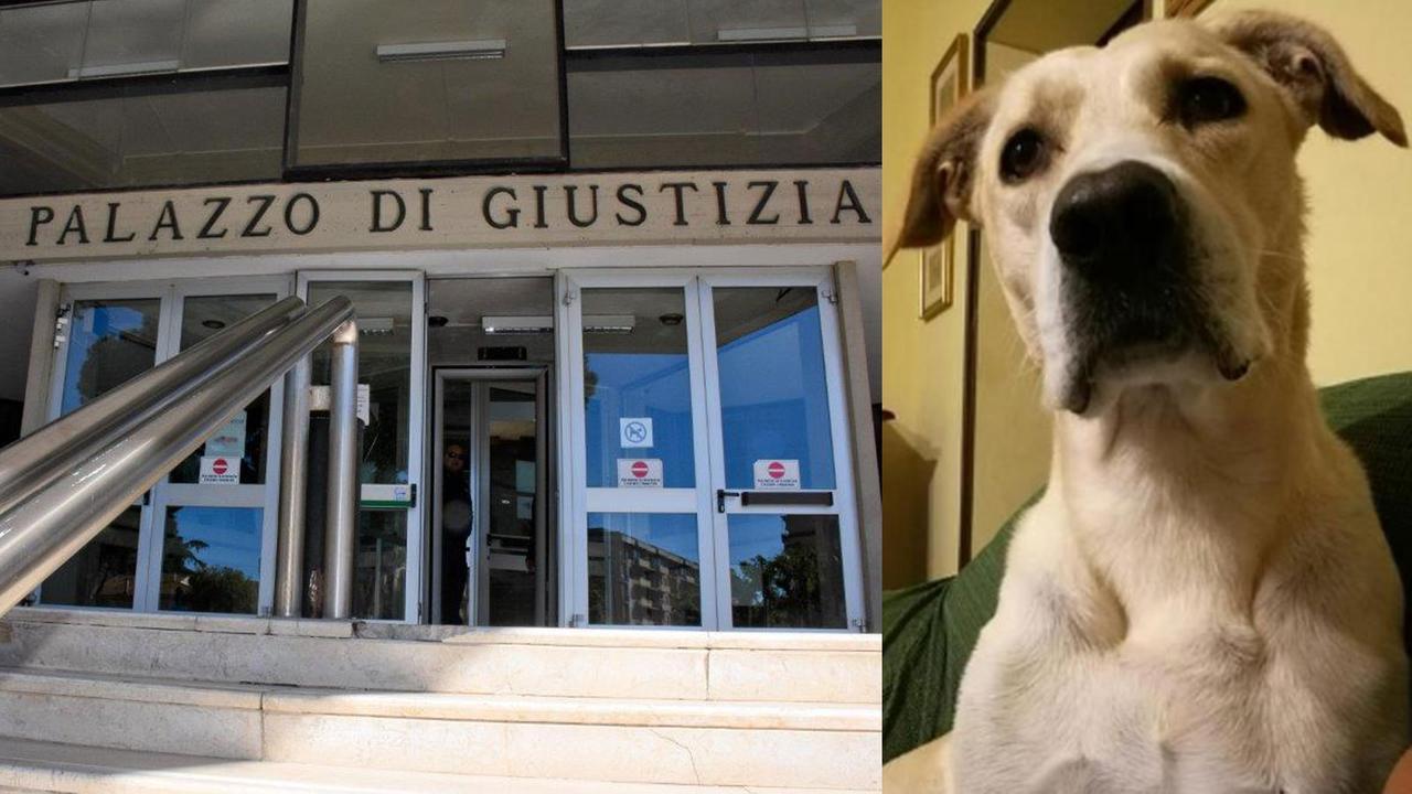 Giustizia per il cane Rocky