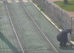 Autista di tram salva la vita ad una povera tartaruga in difficoltà