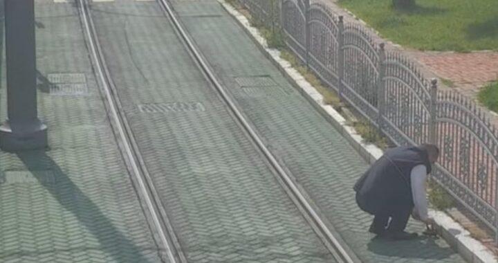 Ferma il suo tram per salvare una povera tartaruga in difficoltà