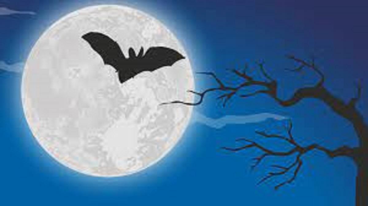 pipistrello notte