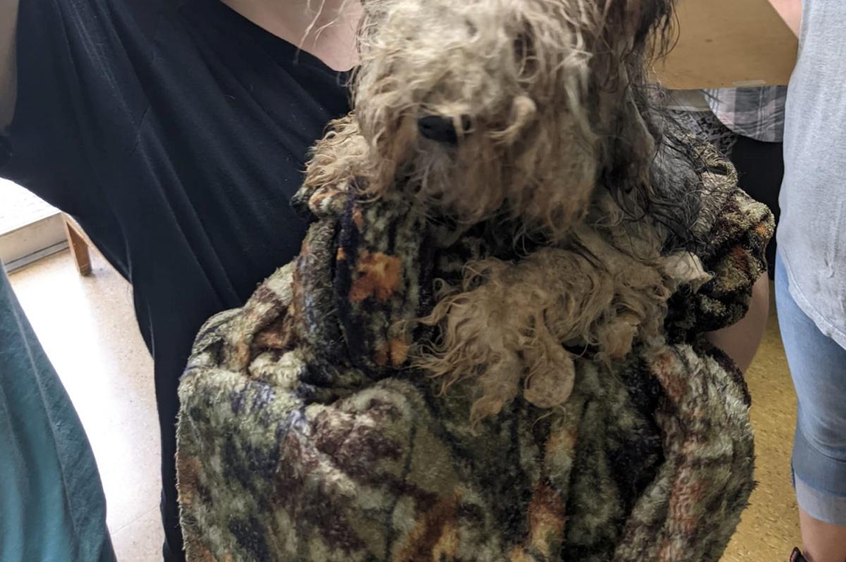 La rinascita del cane Toby